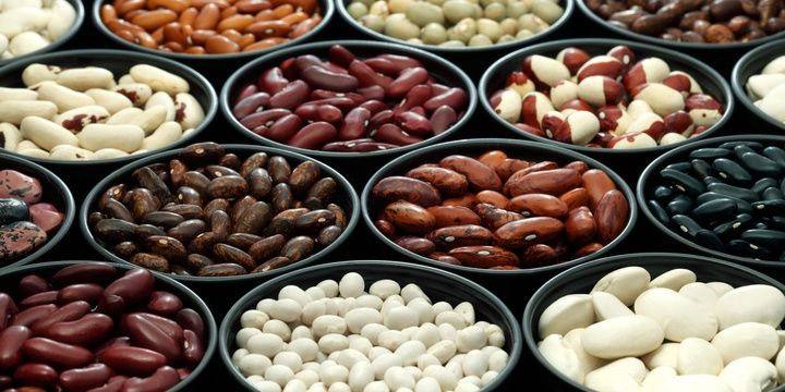 5 Foods for People Who Wish to Live a Long Life Beans