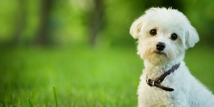 5 Breeds of Small Dogs